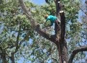 Servicio de poda y tala de árboles