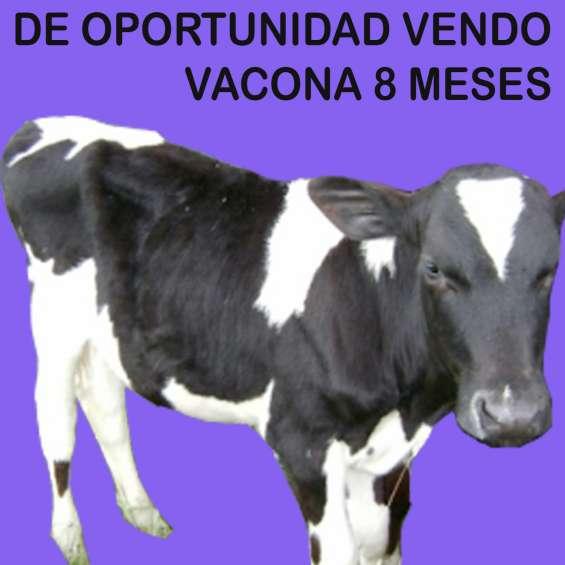 Venta de vaca en sangolquí